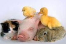 Animal Love / Great pins related to the love and welfare of all animals