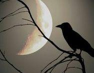 Natt och Dag