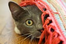 Kitty Cat Love! <3