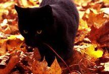 I Heart Halloween / I love Halloween! / by Sylvia