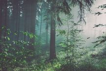 """Fantastic forest / ,,And into the forest I go, to lose my mind and find my soul."""""""