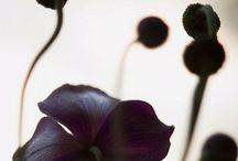 F L O R A L S / Who can resist the pure beauty of a flower?