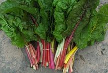 Veg seeds for sale @ EcoSuperior / These seeds are currently available at EcoSuperior for $2.50-$3.25.