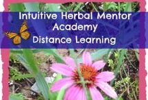 Intuitive  Herbal Online Mentorship / This page is for my students to post the wonderful pictures of their herbal creations and medicines they are learning in our herbal mentorship online program. Students may post anything  you create from your assignments and beyond.  Post medicinal plants and weeds you have found from wildcrafting. This is your opportunity to share what amazing work you are doing. Have fun!! / by Chonteau McElvin