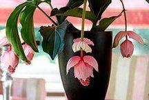 Pokojovky a orchideje