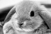 Rabbits / I am very happy with our rabbit friends !
