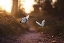 """Butterflies / ,,I've always loved butterflies, because they remind us that it's never too late to transform ourselves."""" - Drew Barrymore"""