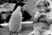 -LOVE PENGUINS-