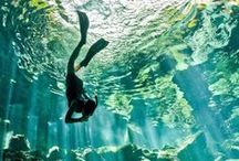 Photography • Underwater / Board filled with Underwater Photography from many different photographers.