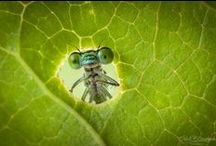 Photography • Insects / Board filled with Insect Photography from many different photographers.
