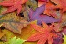 Autumn Colours 2015