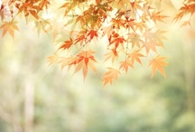 autumn, harvest moon, tricks or treats, turkey and thanks / by Jenn Price