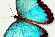Turquoise & Brown  / by Lisa Lanford