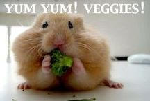 Very, Very Veggie! / Vegetables are always a healthy choice! Check out a variety of good-for-you recipes to try.