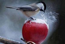Beauty birds
