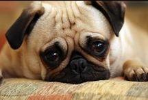 Gatti, Cani...I pelosi! / Notizie, informazioni sulla #salute degli #animali