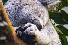 Animals / Animals Cutest #Animals on Earth