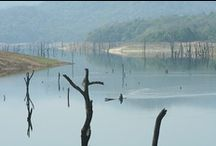 Thekkady (Periyar Wildlife Sanctuary) / Periyar is between 900m and 2,000m above sea level and is excellent for birds and there is also a good chance of seeing elephants, wild boar, gaur bison, sambar deer, Nilgiri langur, macaque monkey, otter and the Malabar giant squirrel. It is a beautiful area to visit and there are a number of activities offered by the forestry department including soft treks into the forest, boat trips across the lake etc and this is why it is such a popular destination.