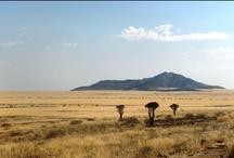 NAMIBIA / NAMIBIA SAFARIS