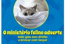 Ministério felino adverte
