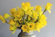 Our Daffodil Wedding