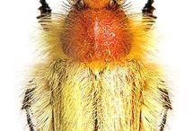 Beautiful Bugs I