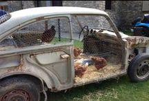 Chickens & Chicken Coops