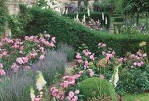 Garden Inspirations / by Pat Johnson