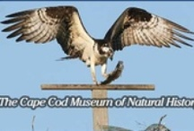 Attractions and activities on Cape Cod near Camp Pembroke / The Cape is only 45 minutes away, and there is so much to explore!