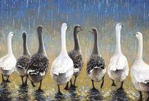 oche geese