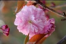 TOP10 Flowering Trees / Fleming's selection of our Top 10 Flowering Trees