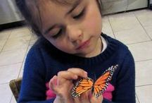 Gotta Go! Gotta Go! by Sam Swope - April 2016 Ivy Kids kit / Ivy Kids Educational Activity Kit featuring the book Gotta Go! Gotta Go! by Sam Swope and over 10 art, literacy, math, and science activities inspired by the story. Learn about monarch butterflies. Perfect kit for spring.