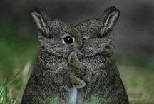 Petites bêtes / So fluffy!!!