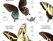 Animaux et Biologie