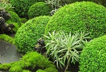 Jardins   -  Gardens / by Elena Carbonell