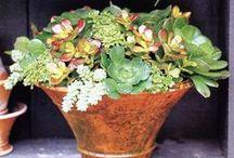Plantes / ni idea