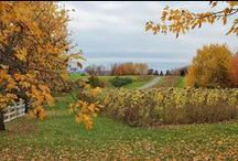 Ile d'Orleans / farms, forests and breathtaking scenery