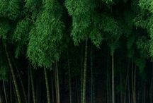 Bamboo  / by Elena Carbonell