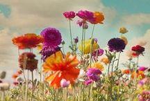Flowers / by Pınar Seval