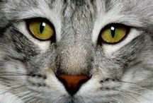 I love Cats / by Linda Hoefner