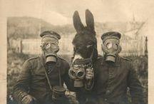 Forgotten Heros / Animals that have played their part during World Wars.