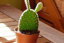 cactus et succulents