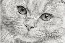 Bleistiftzeichnungen - Tiere