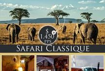Kenya Safari Special Offers 2014 / Thinking of a Kenya Safari? Browse through our hand picked destinations paired up withe the best accommodation options all at an affordable price.