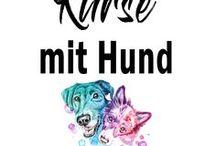Online Kurse zum Thema Hund ☆ / Online Lernen als Hundehalter | Hunde | Erziehung | Gesundheit | Training | Leben mit Hund | Alltag mit Hund | #hund #onlinekurs #hundetraining #hundeseminar