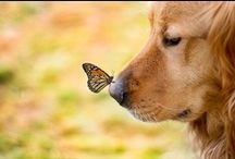 Inspirational Dogs! / Quotes and Photos of Canine Inspiration