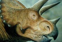 Παλαιοντολογία-παλαιοβοτανική/Palaeontology-Palaeobotany / Ζώα και φυτά που έζησαν πολύ πριν την εποχή μας, από την δημιουργία της Γης μέχρι και σήμερα...