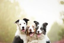 Aahhww happy animals - they will bring a smile on your face <3