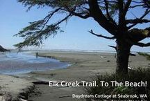The Beach! The Forest! / Beach walks and forest hikes at Seabrook at Pacific Beach, WA