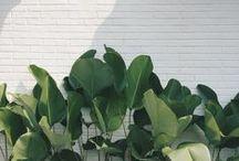 Plant....